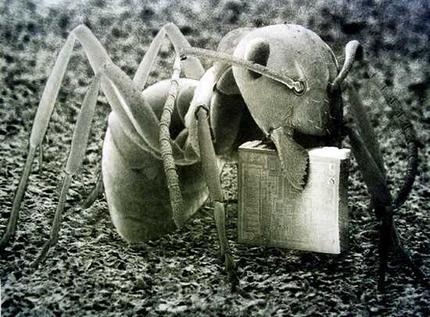 ant_wideweb__430x317