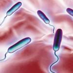 Bacteria